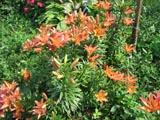 mnogol-cvety