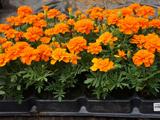rass-cvetov
