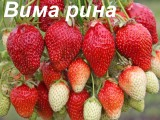 vima-rina