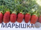 maryshka