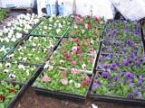 rass-2-let-cvetov