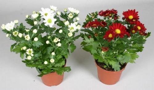 Горшечные растения, купить